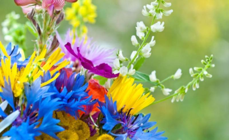 Wildflower Faith