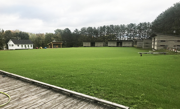 Green grass at Camp Medley