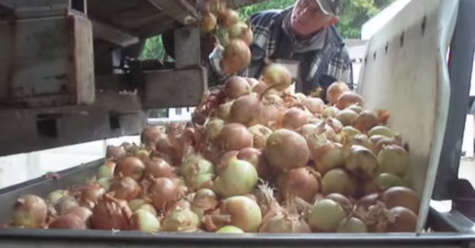 Onion Video image