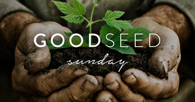 Good Seed Sunday | Invitation to Respond