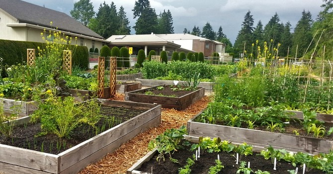 Willoughby Community Garden