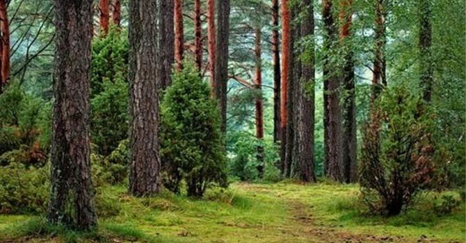 WayPoint in Nature