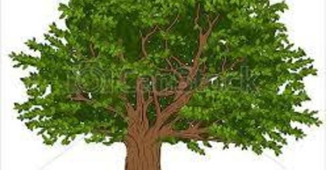 Tree update image