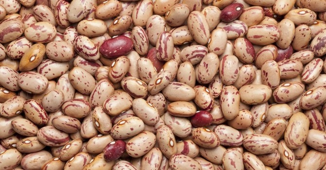 Beans from Grassy Lake, AB image