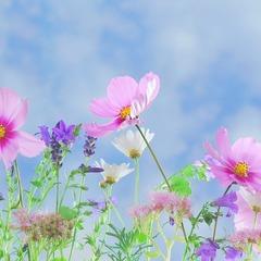 Wild flowers 571940 1920