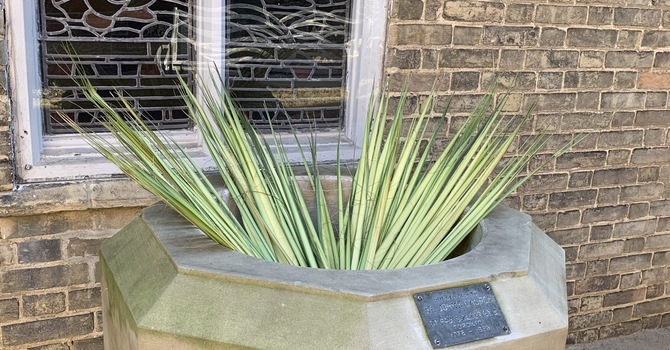 Palm Sunday - Sunday April 5, 2020 image
