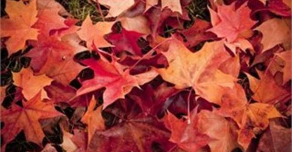 Daylight Saving Time ends   Next Sunday, November 1