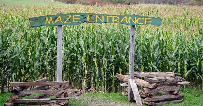 McNaab's Corn Maze image