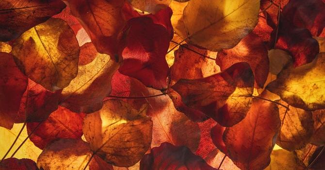 November Worship image
