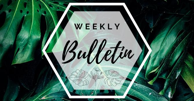 Bulletin | May 31, 2020 image