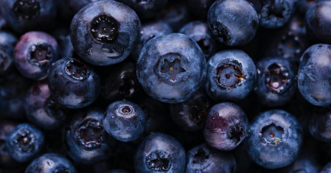 Blueberry Sale 2020: Thank you for your support! image