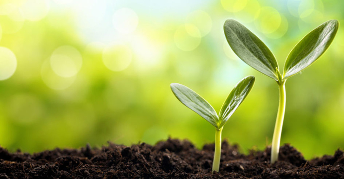 Seeds... image
