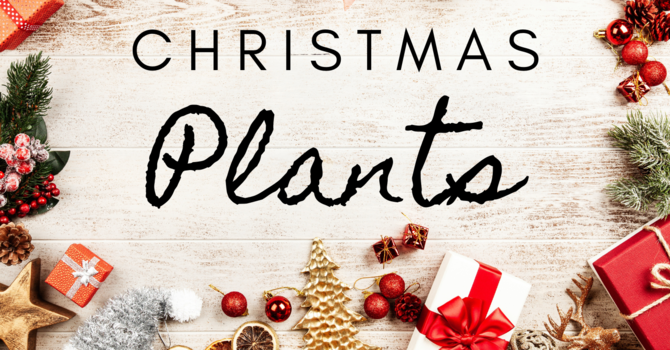 Christmas Plant Fundraiser image