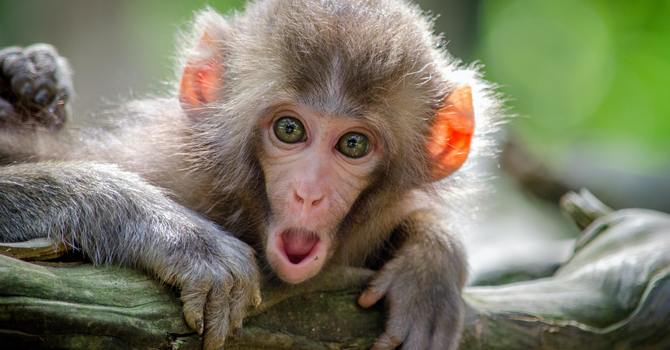 What Monkeys Can Teach Us About Change image