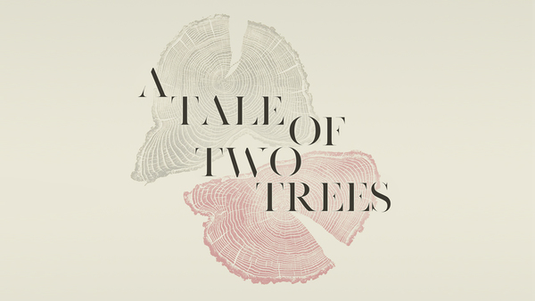 A Tale of Two Trees