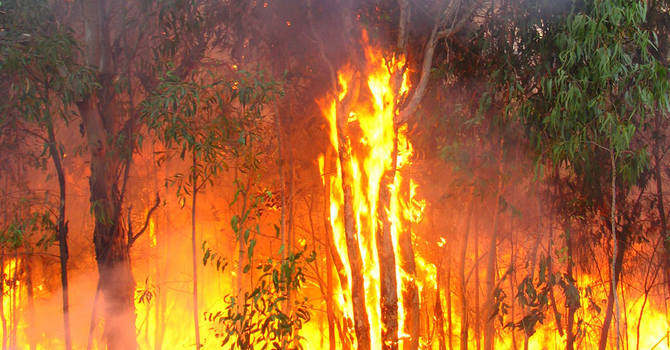 Anglican relief and development agency supports Australian bush-fire appeal image