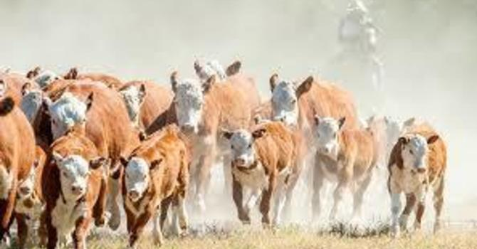 Stop the Stampede