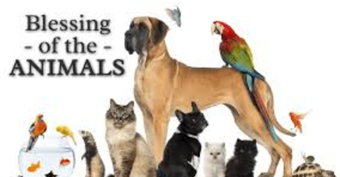 Pentecost 17 - Blessing of the Animals image