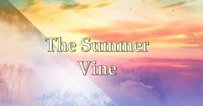 The Summer Vine image