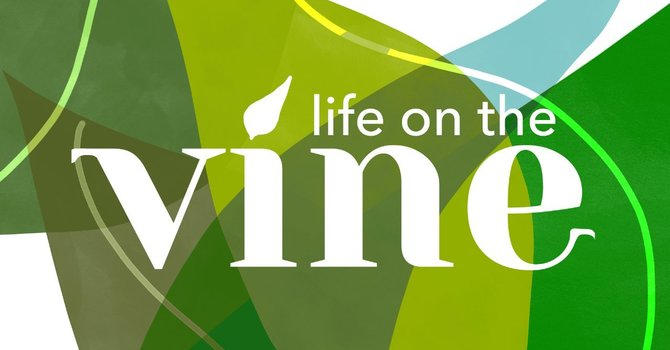 Life on the Vine image