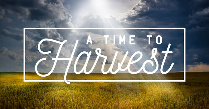 Ps. Steve McCracken - A time to harvest
