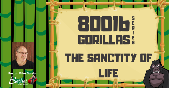 800 lb Gorilla Pt. 5