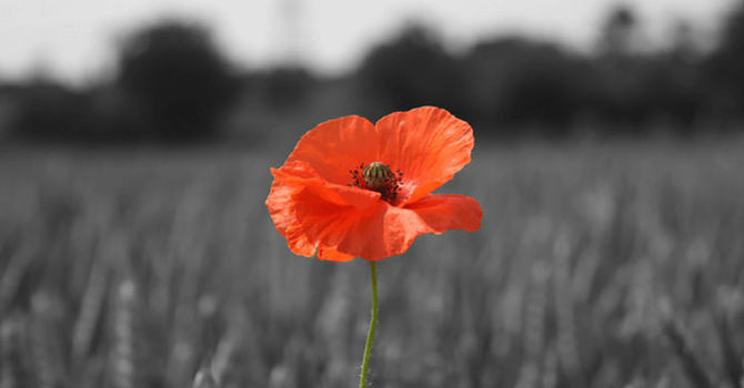 Remembrance Sunday image