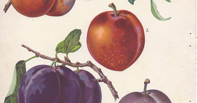 Hands Off My Plums image