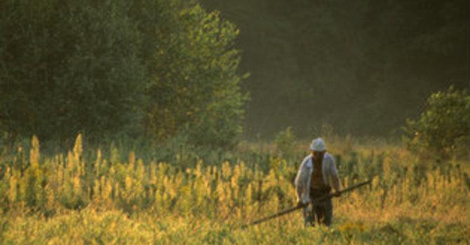 Spring Devotion - The Gardener  image