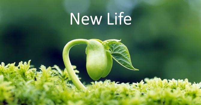 New Life image