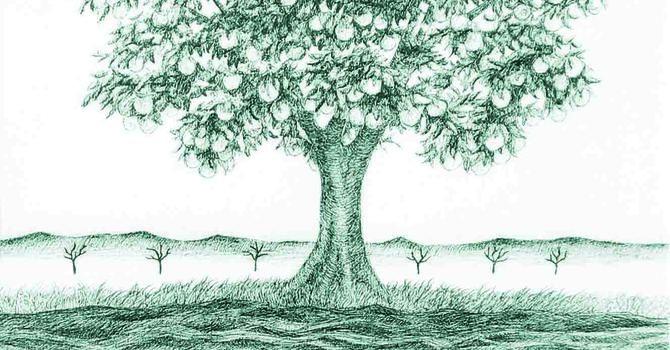 The Torah, Neuropsychology, and Marie Kondo