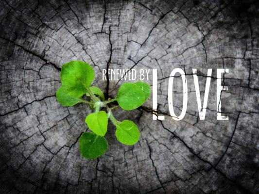 Renewed by Love