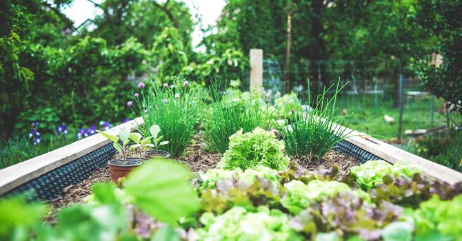 Garden space needed for Shelbourne Community Kitchen image