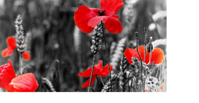 Remembrance Sunday - Sunday November 8th, 2020 image