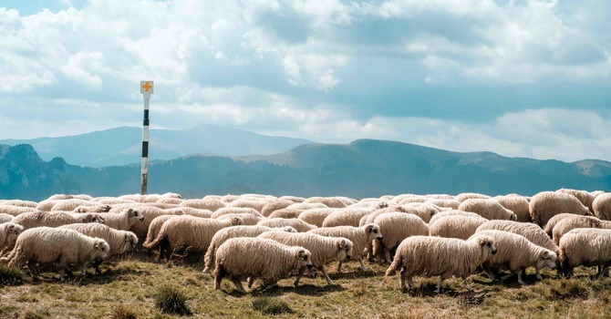 26th June - The Shepherd and His Sheep