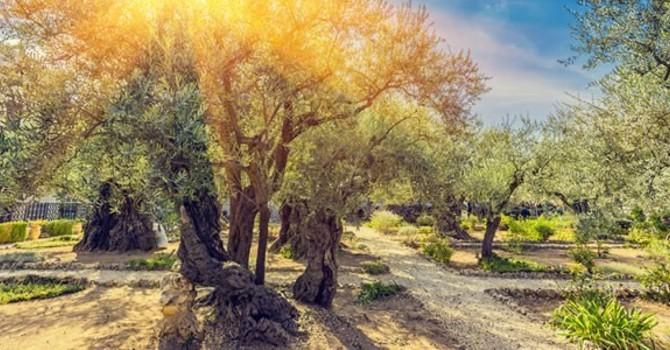 Jesus in the garden of Gethsemane.