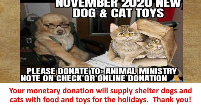 Dog and Cat Food and Toy Drive