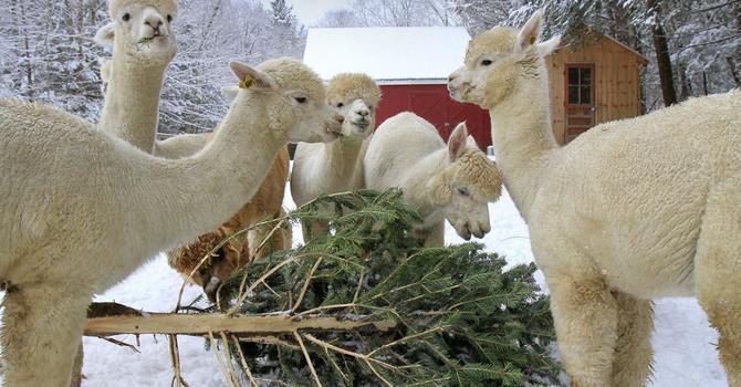 Farm Animal Casting Call! image