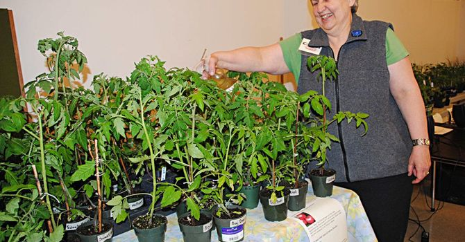 Great response to St Peter's plant sale     image