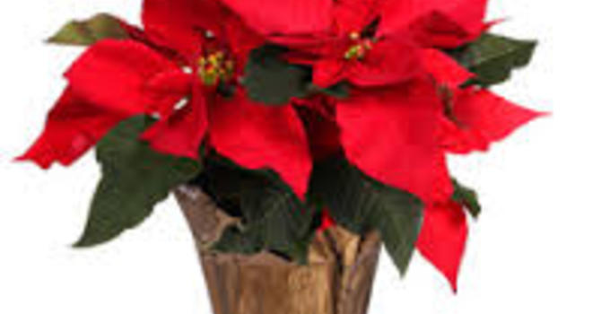 Christmas Flower Delivery image