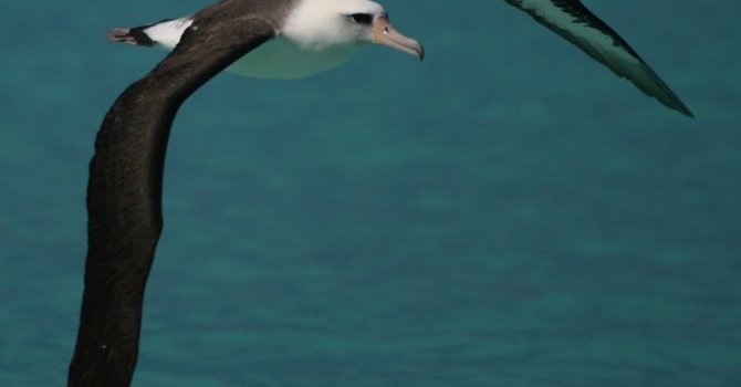 Is Christianity an Albatross? image