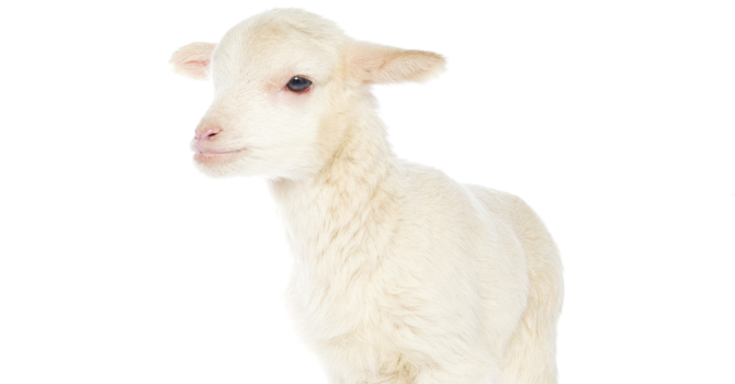 The Power of the Lamb