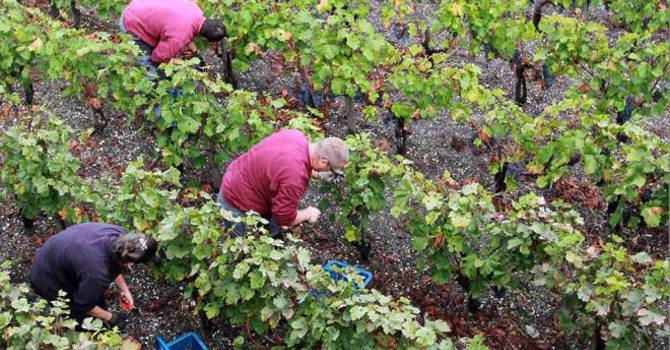 The Parable Of The Vineyard Workers image