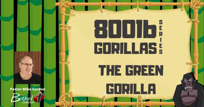 800 lb Gorilla Pt. 6