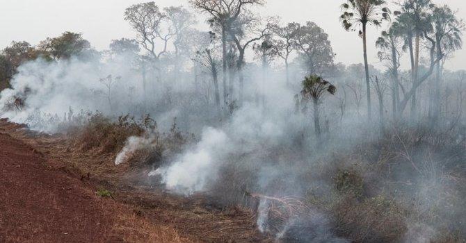 Praying for the Amazon image