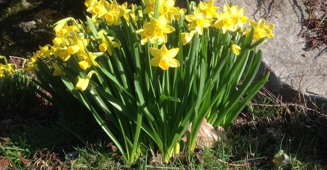 Spring in St. Catherine's Garden image