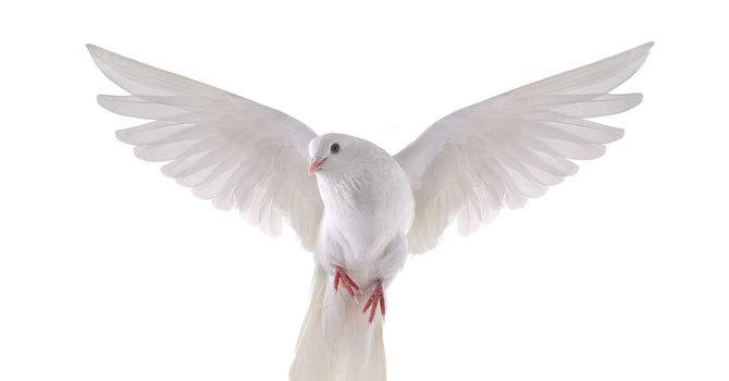 04 - Peace