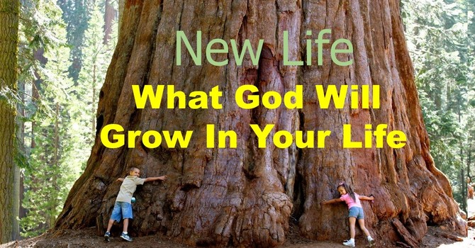 Sermon Title What God Will Grow In Your Life - Goodness and Kindness