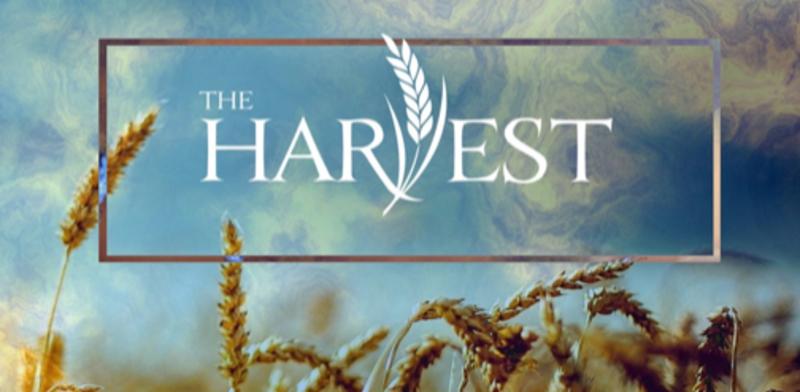 The Harvest - Week 3