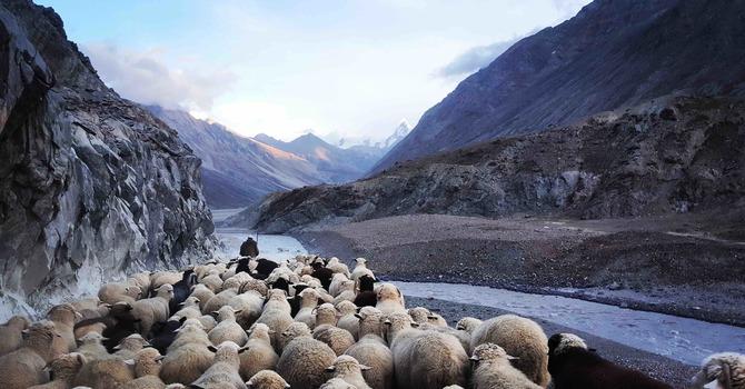 Daily Devotion - The True Shepherd